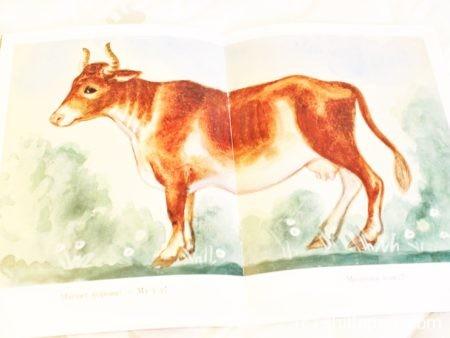 первые книги о животных развитие речи звукоподражание 6